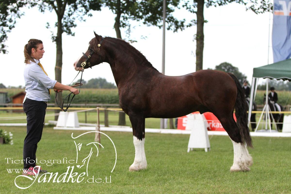 Foto Tierfotografie Jandke (61)
