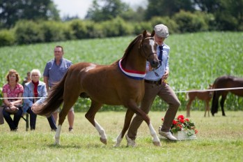 Steehorst Free Golden Girl - Tages-Reservesieger