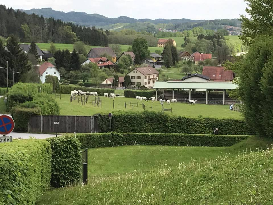 Bayern_Ausflug Piber 2017 (6)