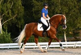 HB Pegasus (1)