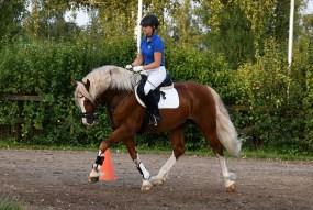 HB Pegasus (2)