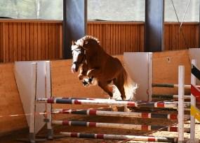 HB Pegasus (3)