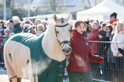 Pferdemarkt Geislingen 2018