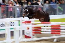 D_Holsteins Namur