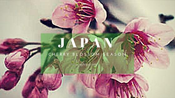 "How to Color your Life in Pink ""La vie en rose"" in Japan"