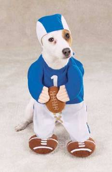 comedy for the unemployed ~~ iGet2Work  Halloween Dog