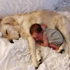 Cute-Pictures-Dogs-Napping-Kids-Babies-1