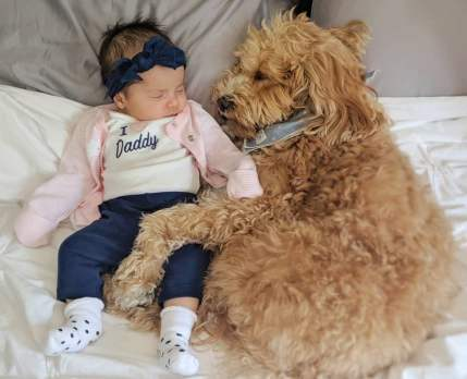 Cute-Pictures-Dogs-Napping-Kids-Babies-7