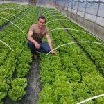 balesti salata