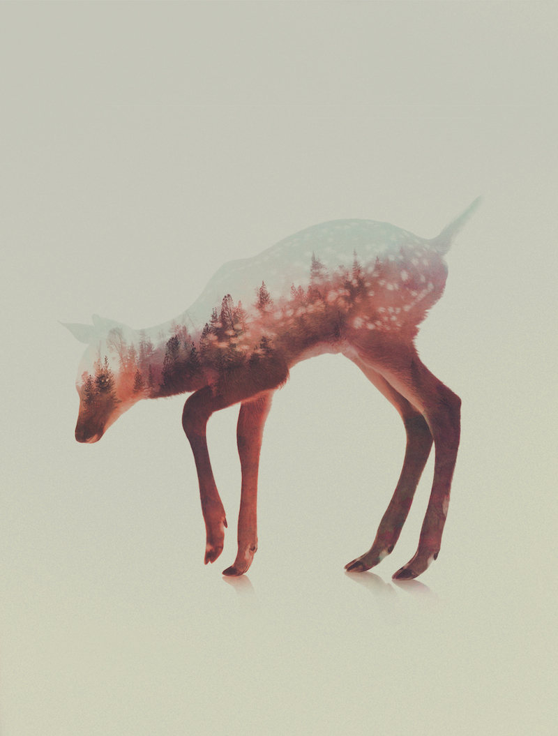 Cute Cartoon Foxes Wallpaper Double Exposure Animal Portraits By Andreas Lie Ignant Com