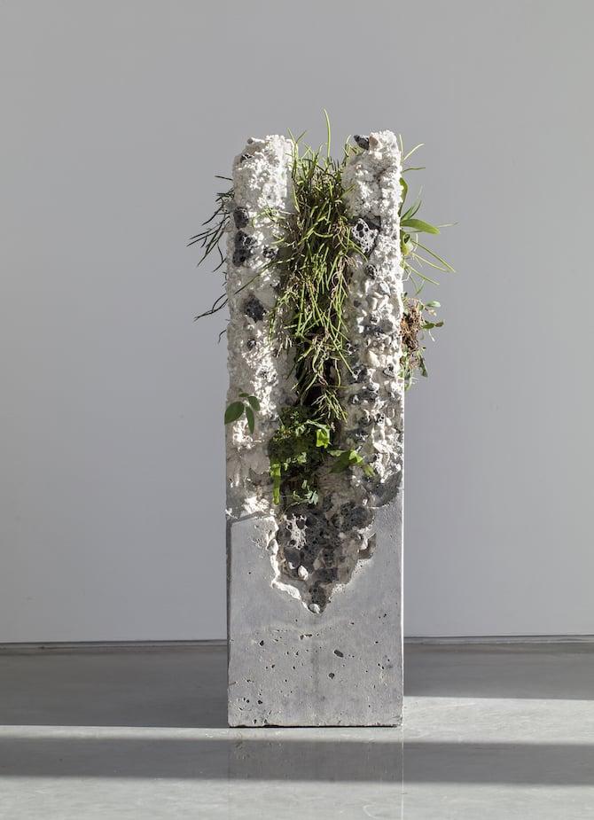 Jamie North Fills Concrete With Australian Plants  iGNANTcom