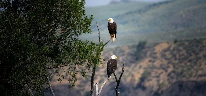 eagles sitting in tree - photo by Nathan Anderson on Unsplash