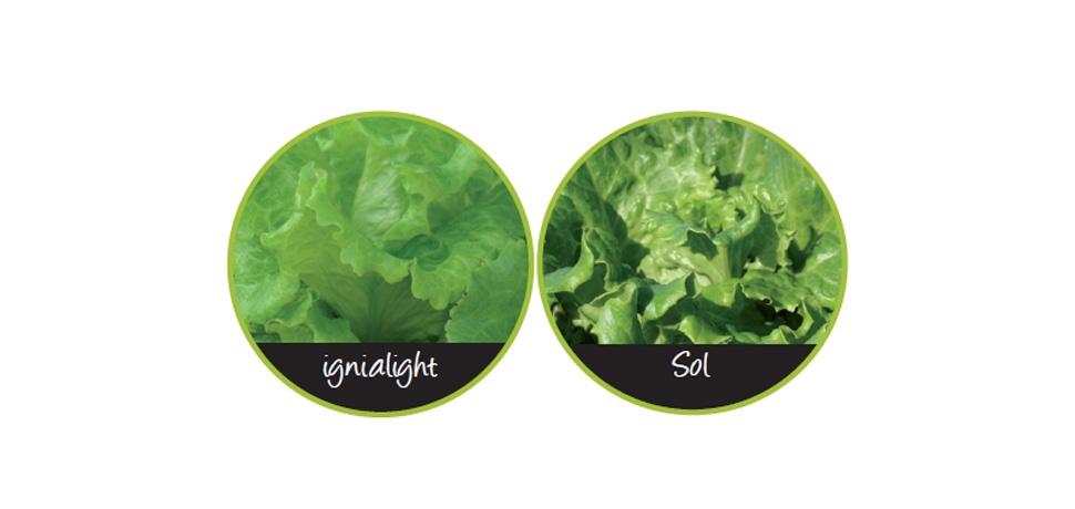 Ignialight  Iluminacin LED para Horticultura