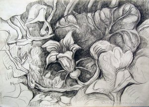 pumpkin_flower_charcoal_pencil