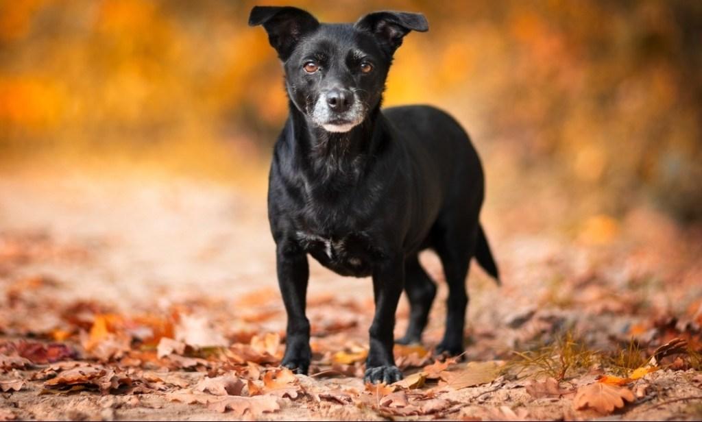 adozione cane taglia piccola