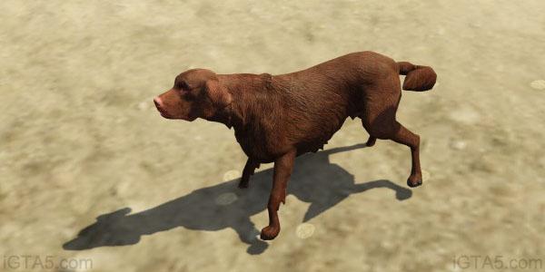 GTA 5 Dogs