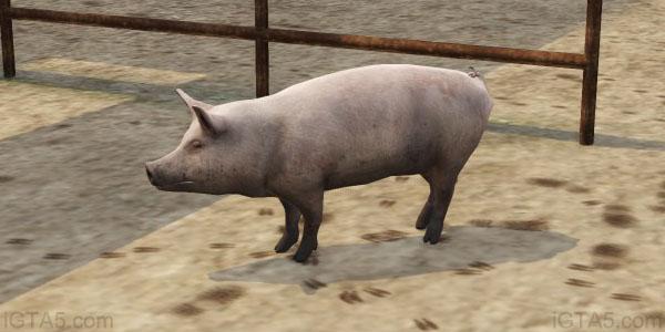 GTA 5 Pigs