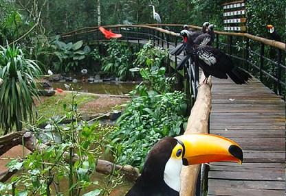 The parrot in iguazu falls