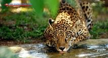 jaguarete-biocentro-iguazu