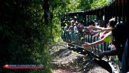 jungle-train3