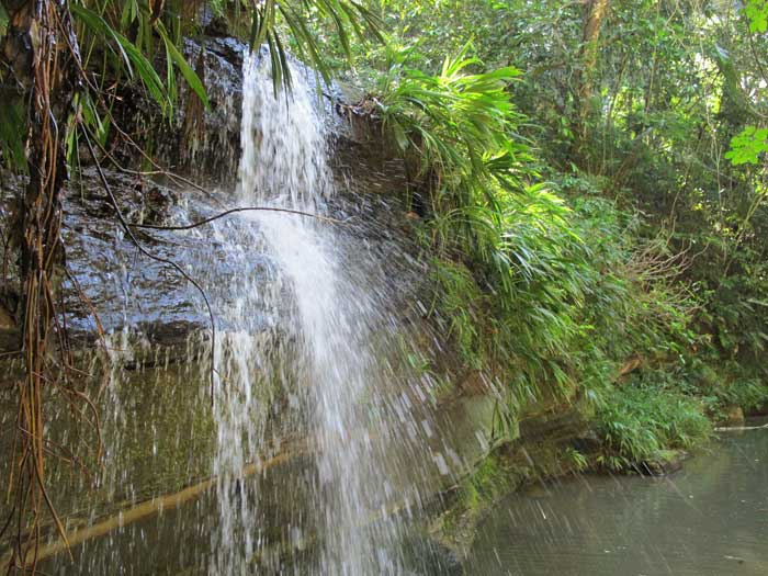 Waterfall at Mayantuyacu