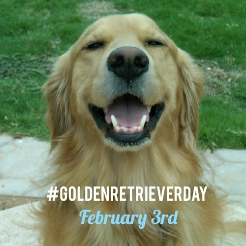 goldenretrieverday1