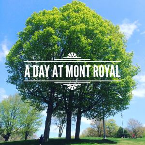 A Day at Mont Royal