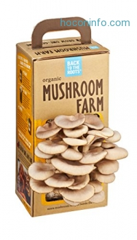 ihocon: Back to the Roots Organic Mushroom Farm