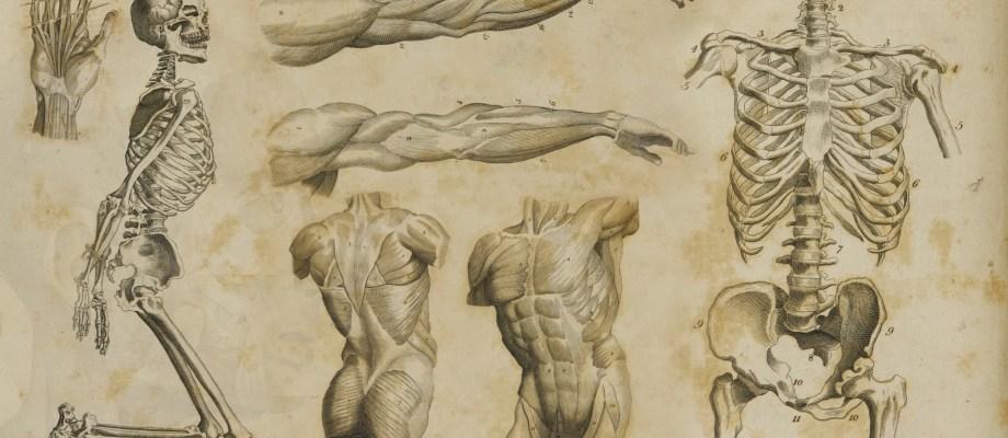 Dancers body
