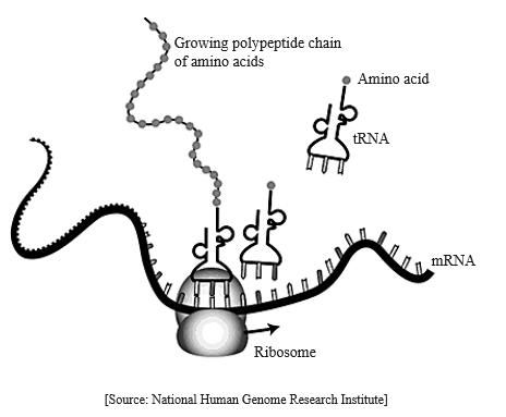 IB DP Biology Topic 2: Molecular biology 2.7 DNA