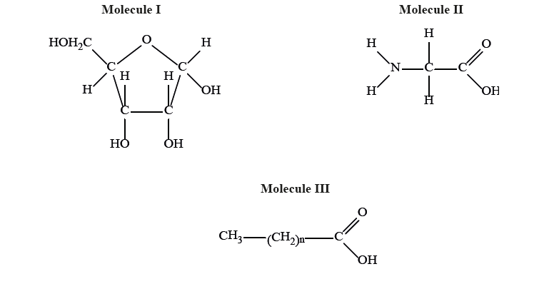 IB DP Biology 2.1 Molecules to metabolism Question Bank SL