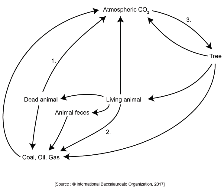 IB DP Biology Topic 4: Ecology : 4.3 Carbon cycling