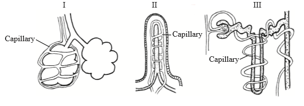 IB DP Biology Topic 6: Human physiology : 6.3 Defence