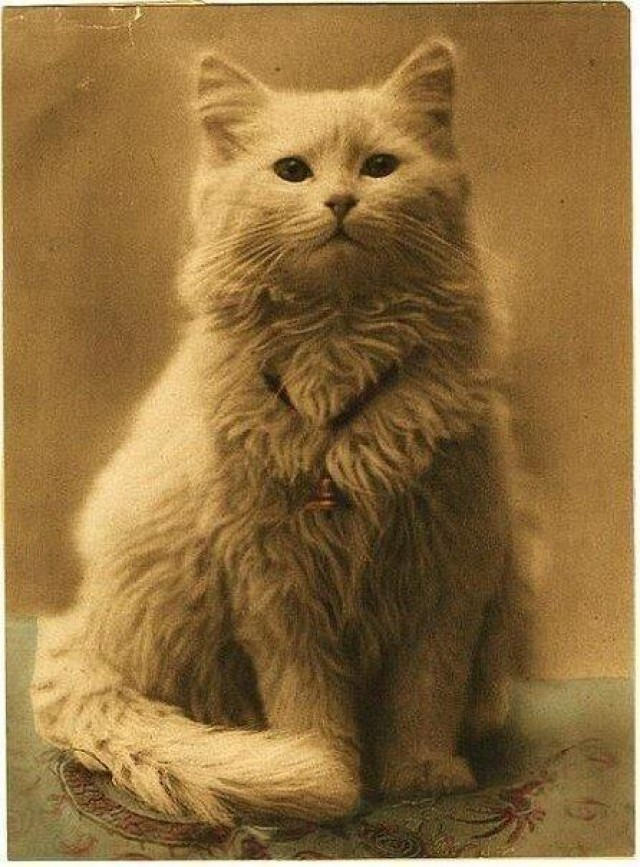 Allegedly This Is One Of The Oldest Photographs Of A Cat