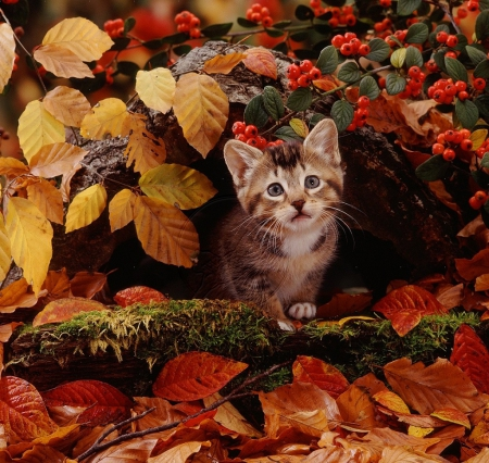 Cute Wallpapers Of Kittens And Puppies 31 Cats Who Are Ready For Fall