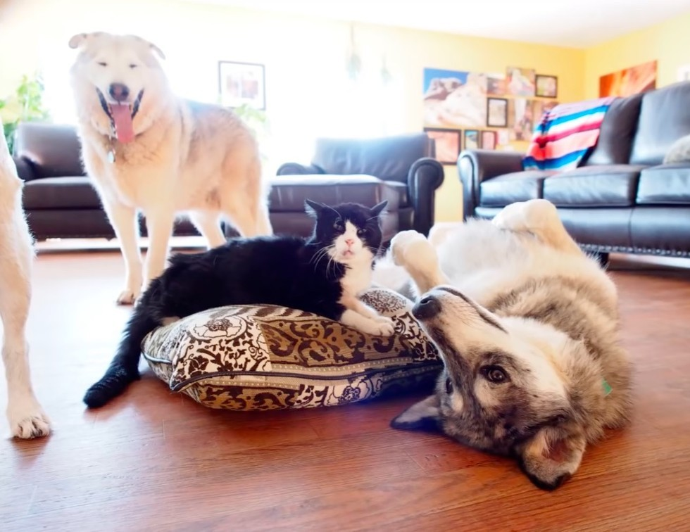 dexter and the wolf pack