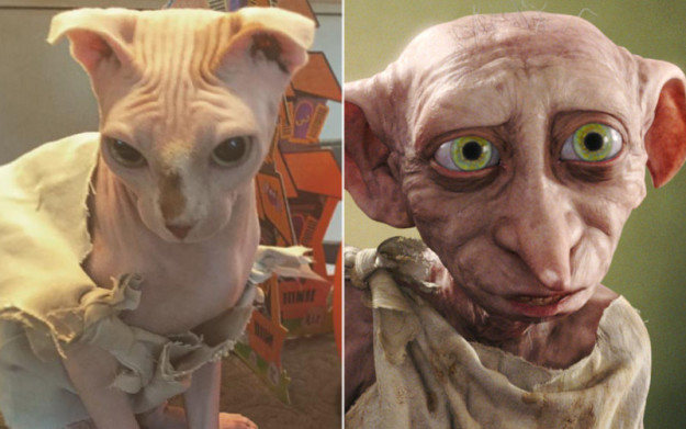 This naked cat's Dobby costume is purrfectly magical