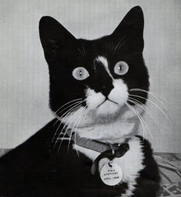 oscar the unsinkable cat