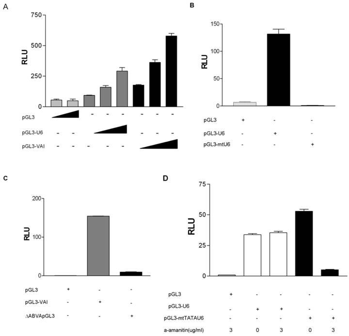 Human Maf1 negatively regulates RNA Polymerase III