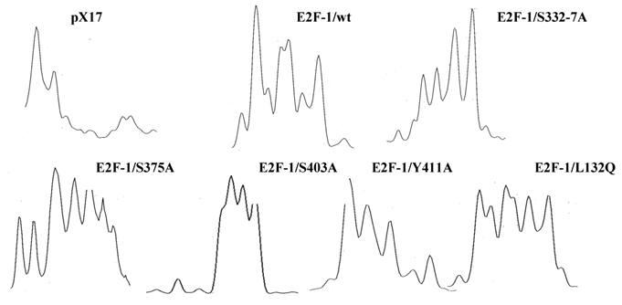 E2F-1 binding affinity for pRb is not the only determinant
