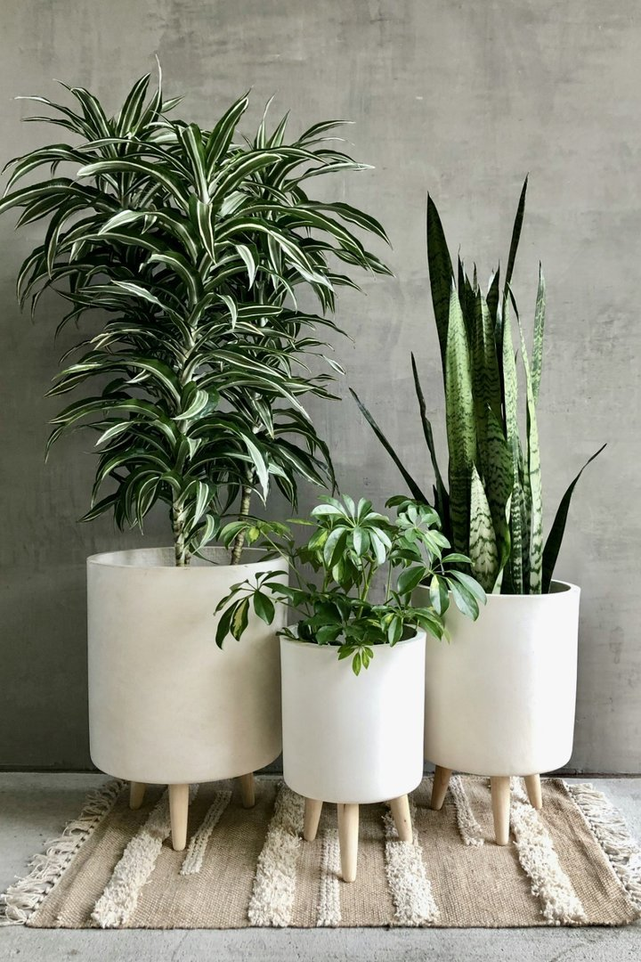 3 white plant pots with wooden legs and green plants from black owned home decor brand