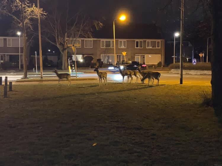 Wethouder Bram Diepstraten waarschuwt voor Bambi