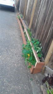 alley way planters box image