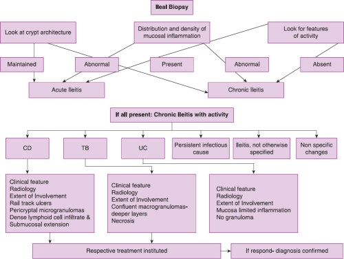 small resolution of figure 3 schematic algorithm showing the suitable histological approach in the interpretation of ileal biopsies