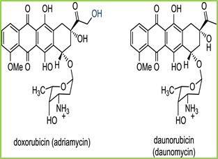 Figure 12: chemical structure of Doxorubicin and Daunorubicin