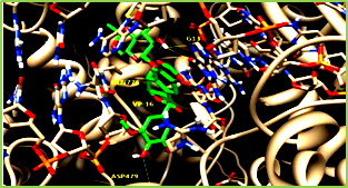 Figure 15: Molecular graphics of the snapshot of the Top2β-DNA-VP16 (etoposide) ternary complex in the end of the explicit-solvent molecular dynamics simulation