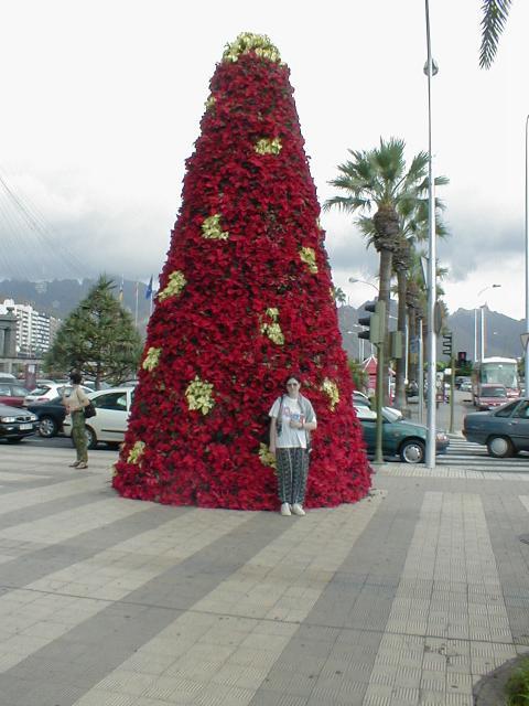 Nel pomeriggio visita a La Laguna la citta che ospital Universita di TenerifeNel museo di