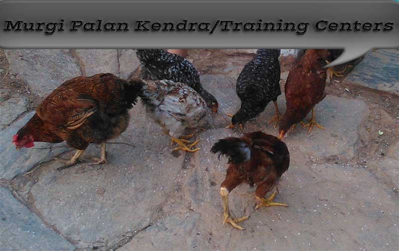Murgi-Palan-Kendra-Training-Center