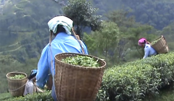 tea export business plan in hindi