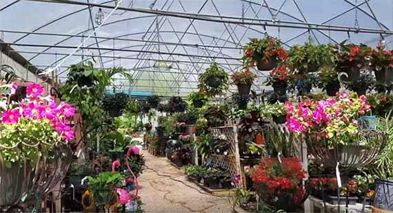 plant nursery business in hindi